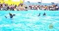 Дневные представления в Одесском дельфинарии!!!